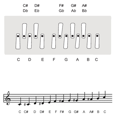C tuning keyboard layout of Shruti Box M3